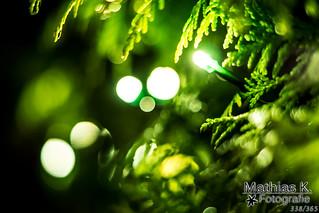 Grüne Lichter | Projekt 365 | Tag 338