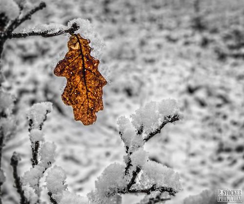 Erster Schnee / First Snow