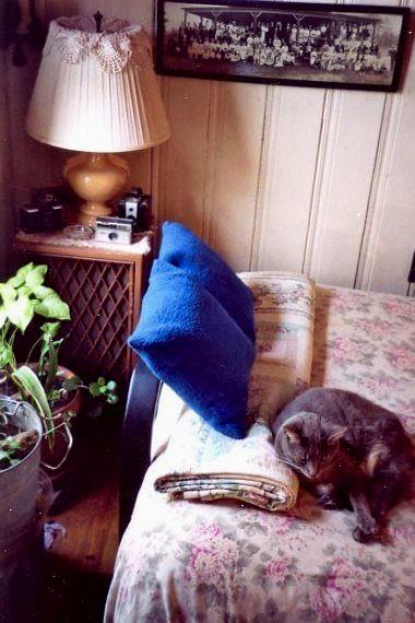 Buddy on bed, Ellicott City, Maryland; February 15, 2007