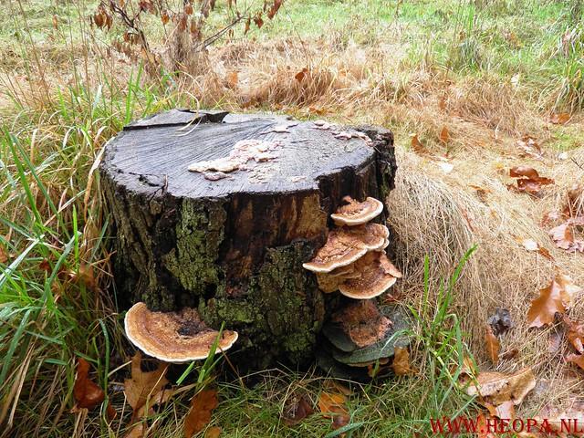 20-10-2012     Wedeblick-   Driebergen        25 Km (79)