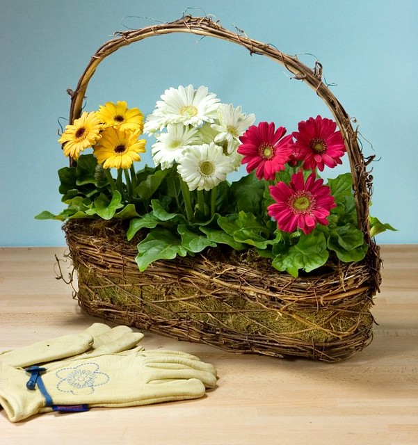 basket of red white and yellow daisies with gardening gloves on a table
