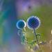 Psychedelic Lollipops (Dallmeyer Max-Lite 1.9/3 inch) by backsidewalkaround