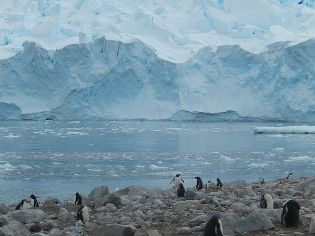 Earthly Paradise, Neko Harbor Antarctica