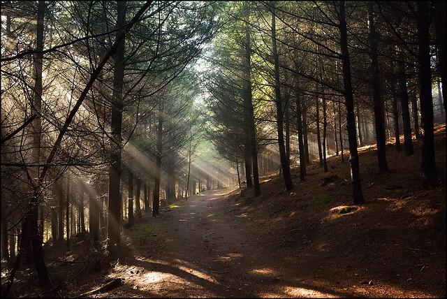 La lumière en forêt, une histoire de partage