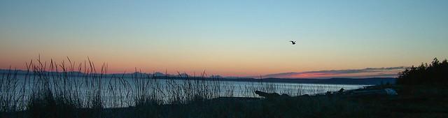 Sunrise, Sequim Bay (EXPLORED)