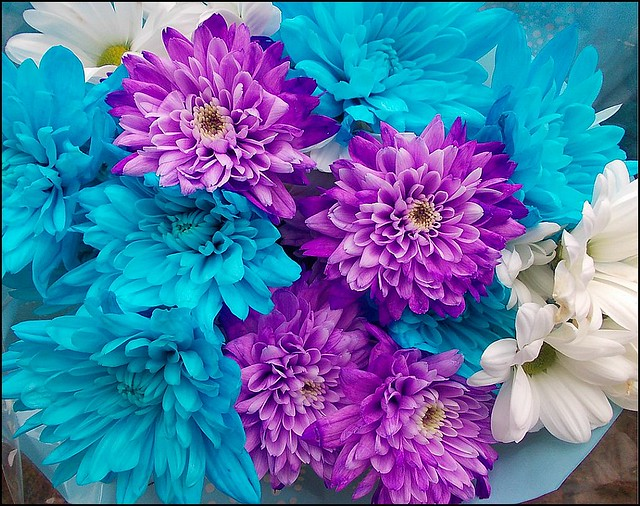 Purple and Blue ..