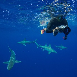 Can't wait to dive with these guys again, photo by @juansharks | by holladayphoto
