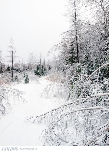 travel trees winter snow canada ice forest landscape quebec hiver arbres icestorm neige paysage forêt estrie winterlandscape easterntownships winterscene travelphotography enneigé traveldestination wintrylandscape paysageenneigé travellocations