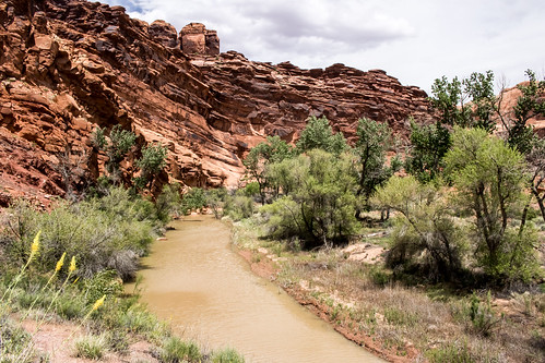 Vegetation in Lower Courthouse Wash, Arches National Park, utah
