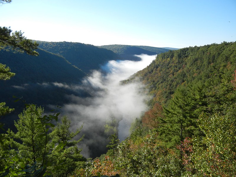 Tioga State Forest