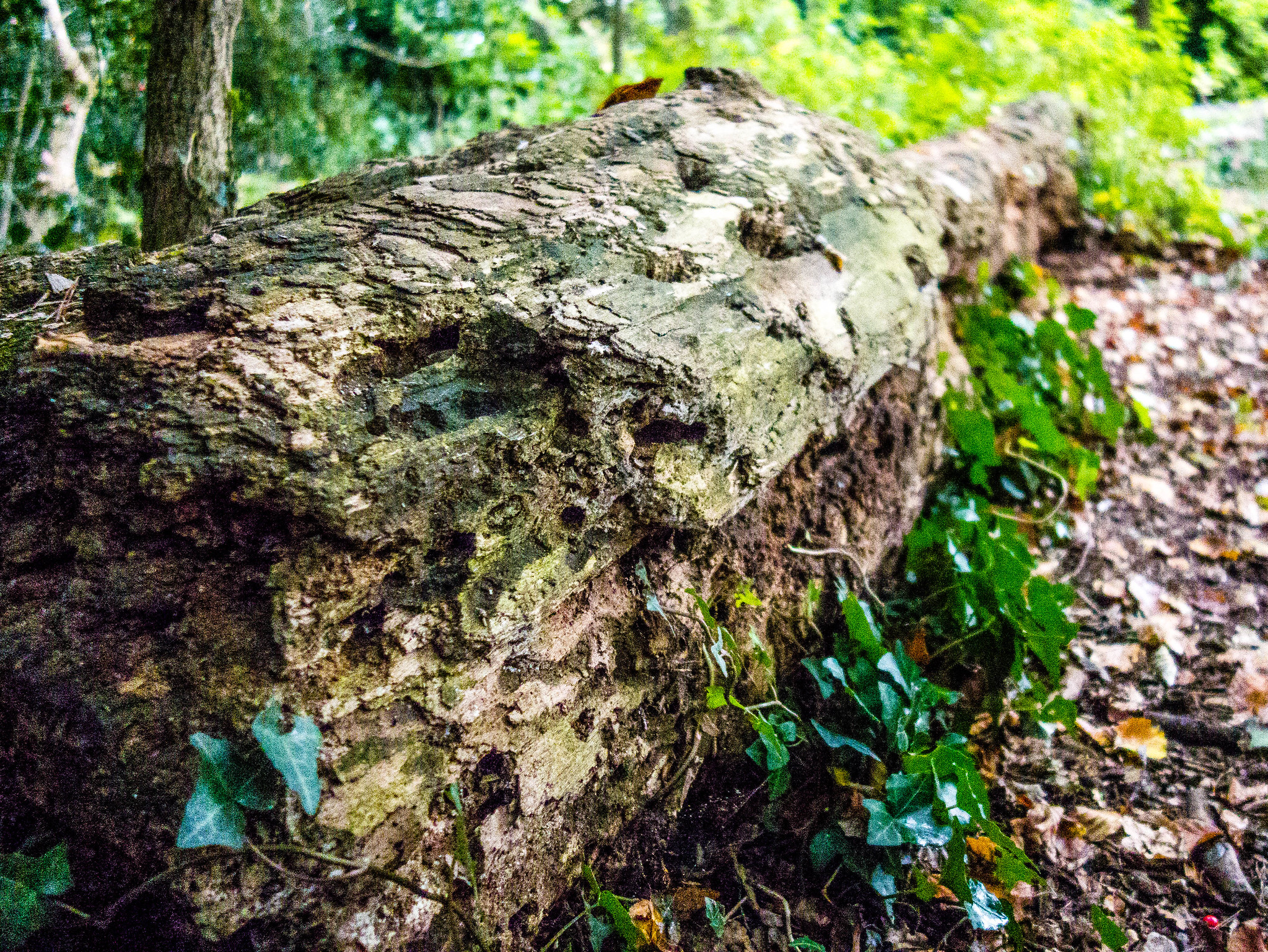 Old Tree Trunk