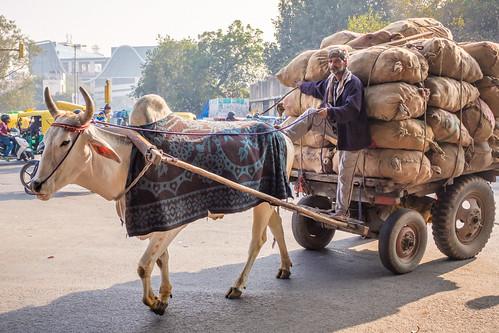 Cow Power | Old Delhi, India | by t linn