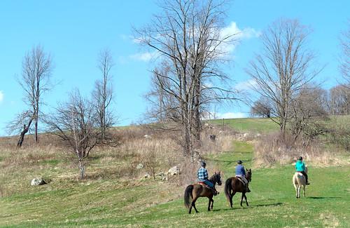 chancyrendezvous davelawler blurgasmcom blurgasm rider horse horseback field burncoat sibley farm path equestian sunny weather nature trees landscape lawler
