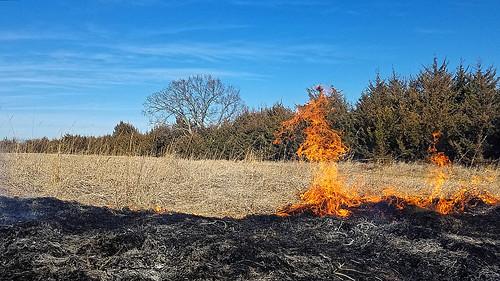 prairie fire easternredcedar