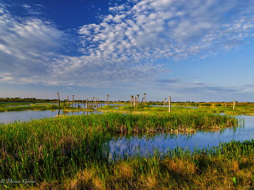florida landscape sunset vierawetlands water