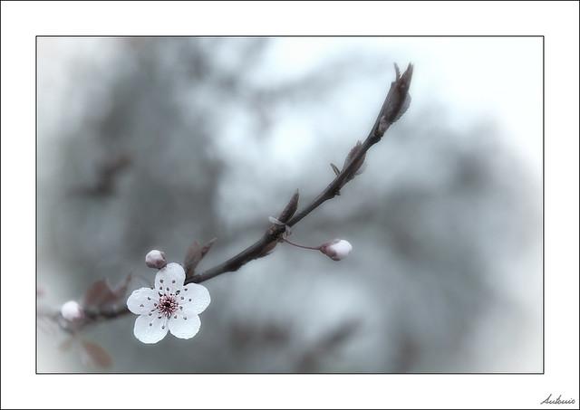 Una primavera de doble cara