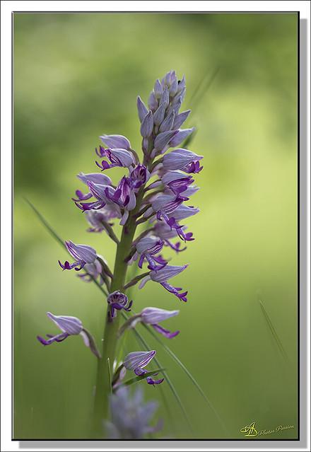 Orchidées (01)