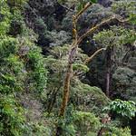 01 Viajfilos en Panama. Sendero Quetzal 45
