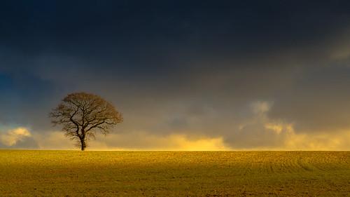 winter light england cold color nature beautiful canon landscape vibrant gloucestershire 6d fabuleuse ericgoncalves