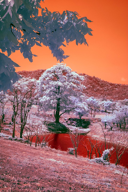 Thai Infrared Scene With Pond
