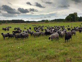 Gotland | by Tartanna
