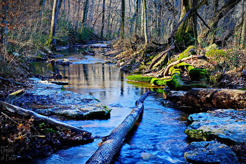 blue creek forest gold woods tennessee