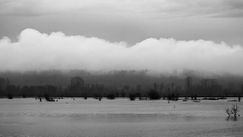 blackandwhite clouds water marsh nisquallynationalwildliferefuge contrast trees outdoors nature scenic pacificnorthwest canoneos5dmarkiii canonef100400mmf4556lisusm landscape monochrome washington