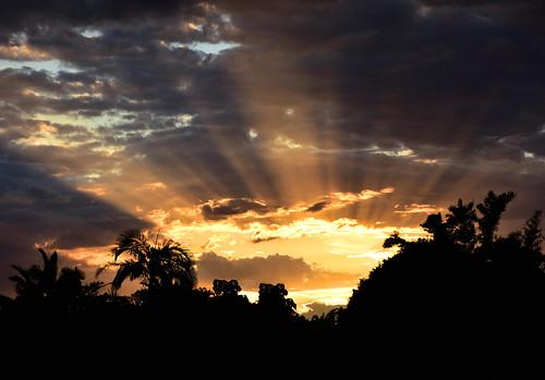 nikon d7200 dusk trees twilight bamboo clouds sky sunset tamron palmtrees tamronsp2470mmf28divcusd topf25 bluesky 2016 october sun summer 500v20f 1500v60f