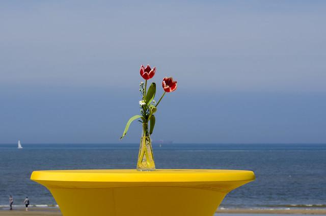 Tulips at sea