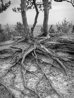 Roots | by Citizen 4474