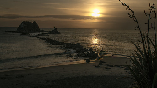 newzealand summer beach sunrise landscape outdoor flax mangawhai phormiumtenax