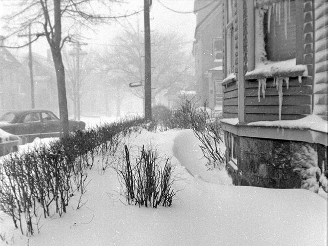 Blizzard 1956: My Yard