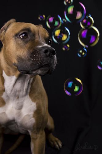 bubbles | by kitti_tikasz
