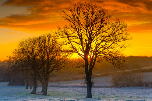 morning england cold frozen frost gloucestershire canonef2470mmf4lisusm canon6d ericgoncalves