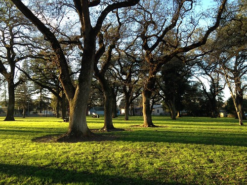 Majestic oak #trees in Manuel Vierra Park. #Gridley #California
