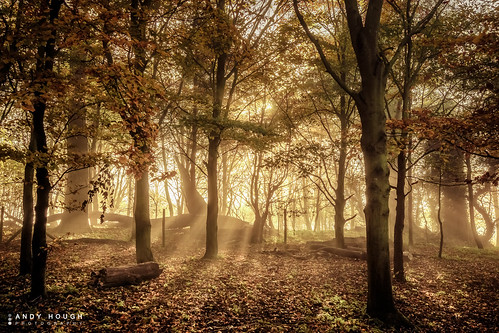 morning trees england sunlight leaves woodland unitedkingdom sony logs sunrays a77 roundhill wittenhamclumps southoxfordshire littlewittenham sonyalpha andyhough earthtrust slta77 sonyzeissdt1680 andyhoughphotography