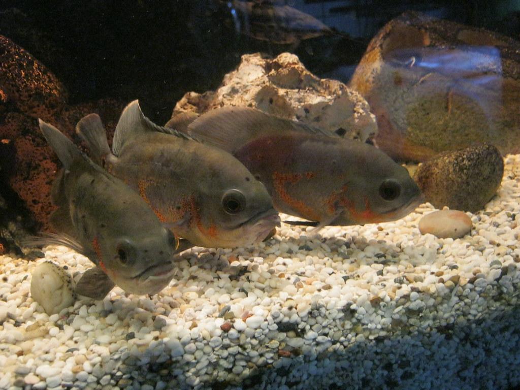 Fish posing