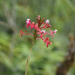 Mo, 09.03.15 - 14:34 - Wilde Orchideen