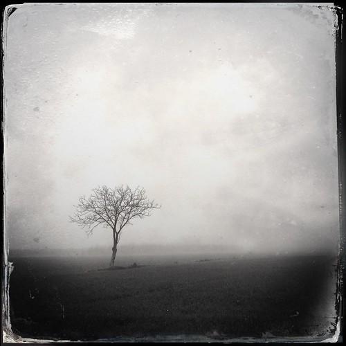 winter italy tree fog landscape ferrara zerantuno