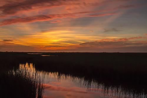 pink blue orange fish color water silhouette yellow sunrise us wildlife estuary national service saltmarsh refuge brazoria cordgrass