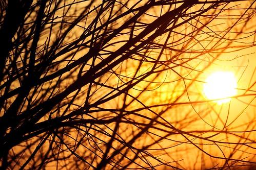 La natura dell'inverno - Winter's Nature | by Davide Gabino (aka Stròlic Furlàn)