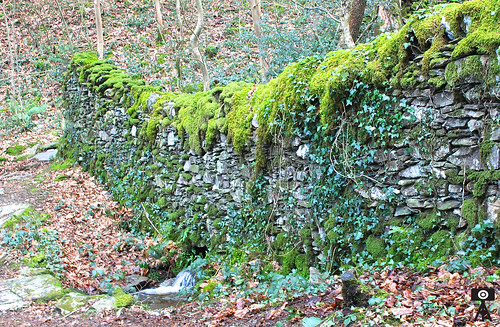 The Moss-Covered Wall | by Astronist Institution