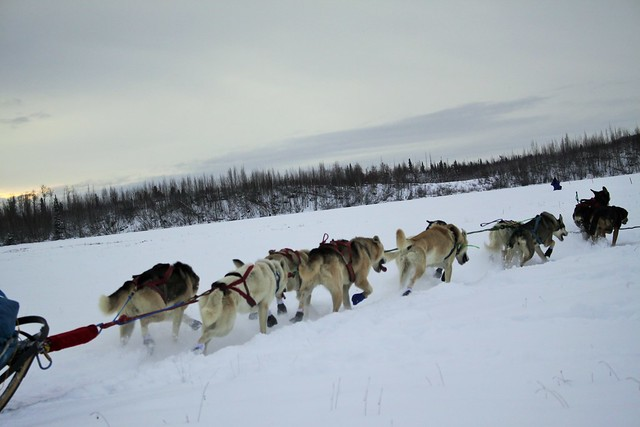 Northern Lights 300 sled dog race Canon pics 473