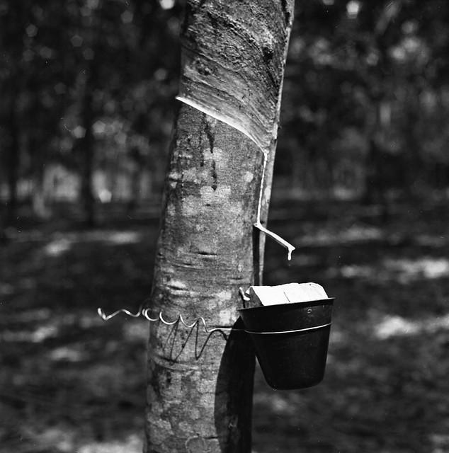 Terengganu : Rural Living