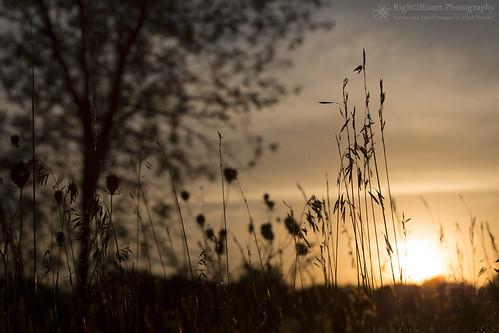 nebraska summer warm hot heat heatwave sunset prairie plains midwest omaha nealewoods fontenelleforest natureassociation right2roam silhouette elijahhassler right2roamphotography