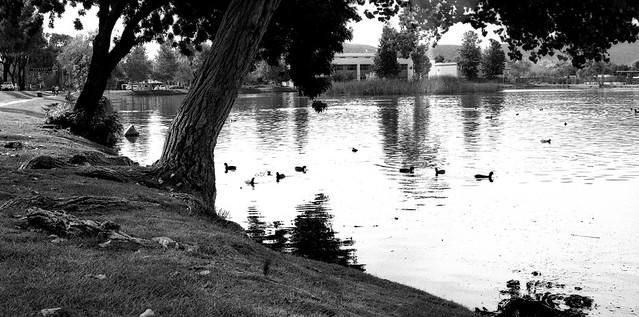 El lago (Mamiya RB 67) (PruebaMamiya006)