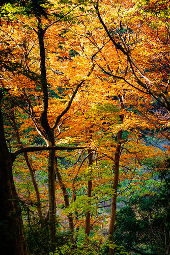 autumn color fall japan tokyo seasons