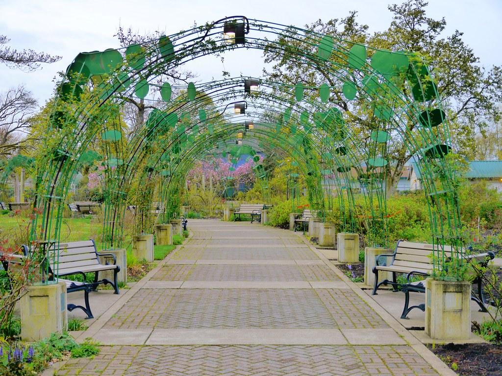 Climbing Rose Arbor In Owen Memorial Rose Garden In Eugene Flickr