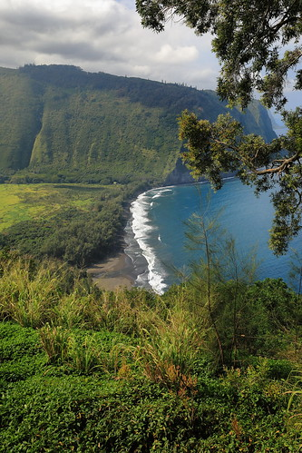 waipiovalley lookout hawaii waipio valley ocean black sand beach nature tree grass landscape water river forest mountain rainforest hill vegetation outdoors sky lush leaf jungle noperson outdoor bush flora plant green grassy land summer scenic scenery daylight view travel ecosystem