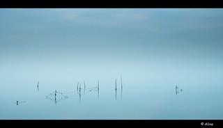 frozen II | by Aline van Weert